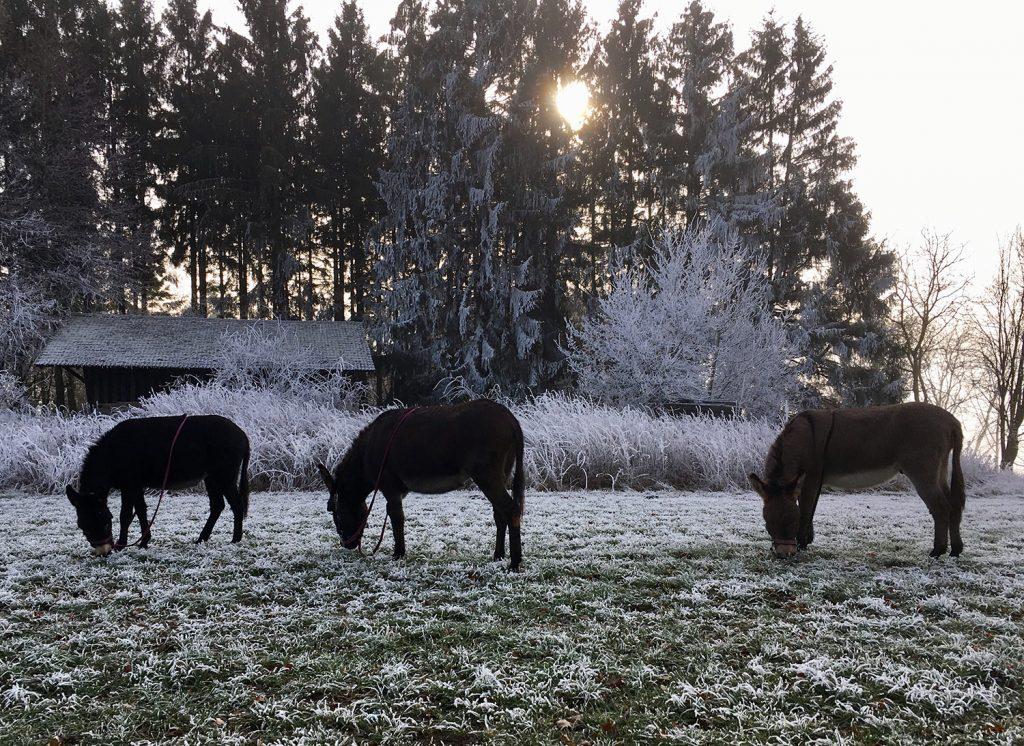 Winter im Überwald