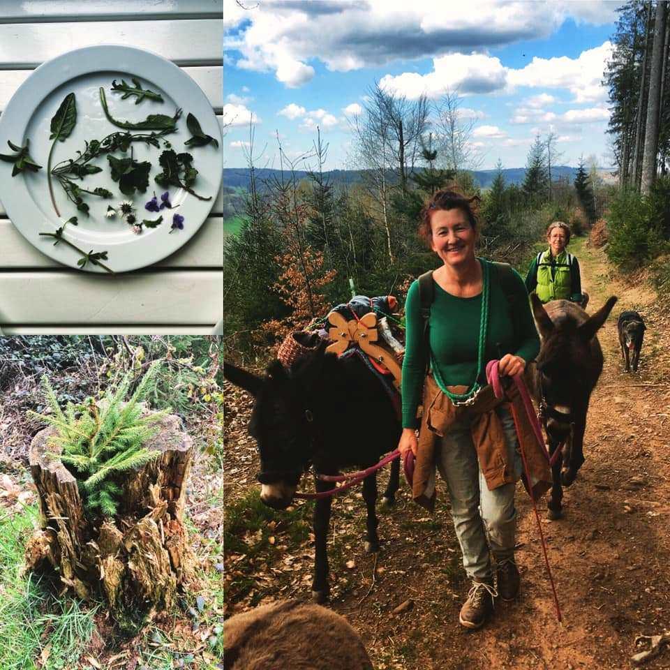 Frühjahrs-Wildkräuter-Eselwanderung im April 2019