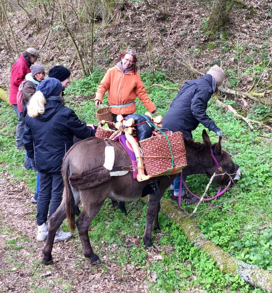 Frühjahrs-Wildkräuter-Eselwanderung