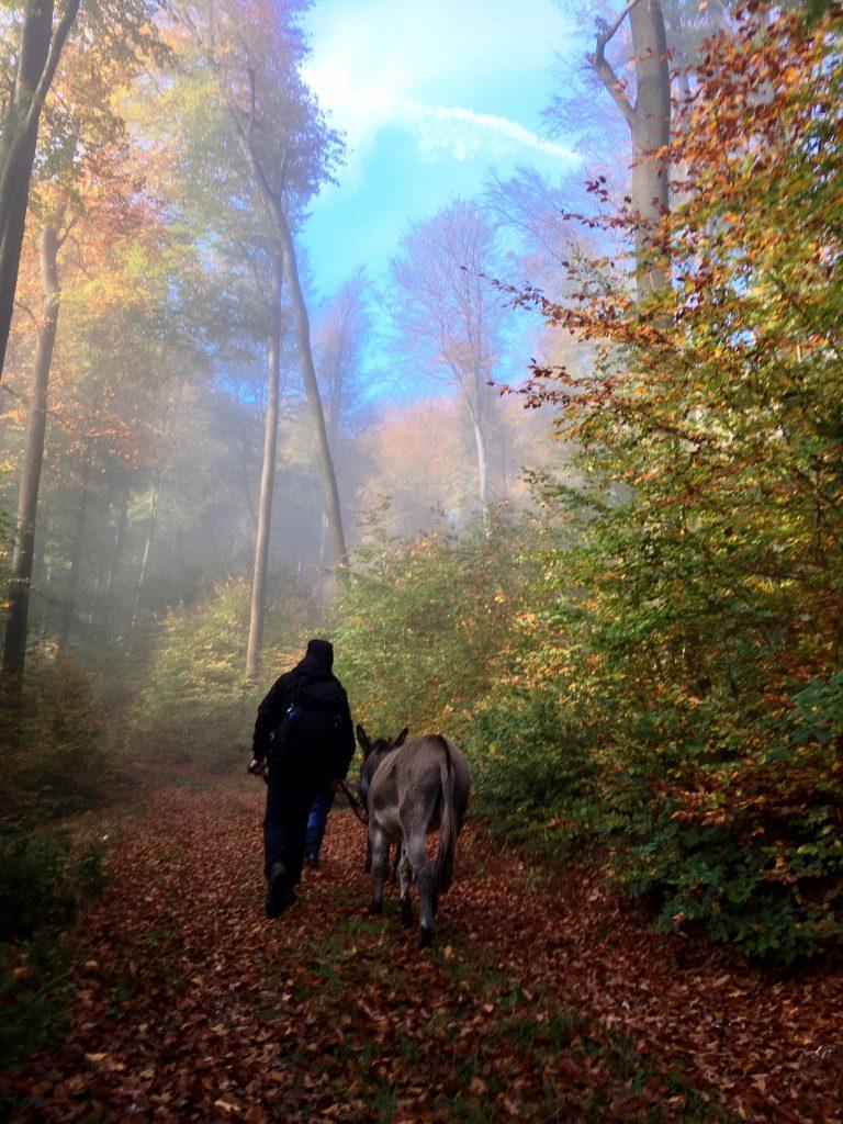 Herbst Eselwanderung